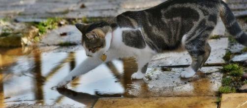 chat s'il met sa patte dans l'eau ce n'est pas seulement pour jouer