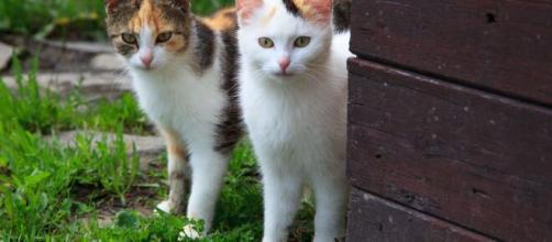 Depuis qu'ils sont bébés, ces chats prouvent qu'ils sont inséparables (image d'illustration Flickr)