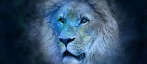 Coisas que nativos do signo de Leão gostam. (Reprodução/Pixabay)