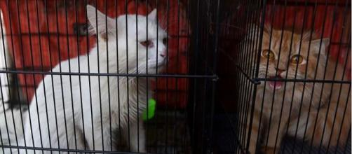 Algunos animales abandonados por la cuarentena de coronavirus pudieron ser rescatados por activistas. Pero la mayoría habían muerto.