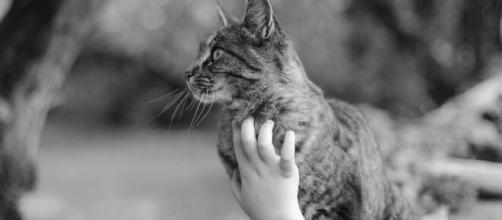 chat : attention à ne pas trop le caresser pendant le confinement