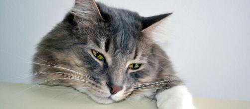 chat : ces différents signes qui montrent qu'il est triste - Photo Flickr