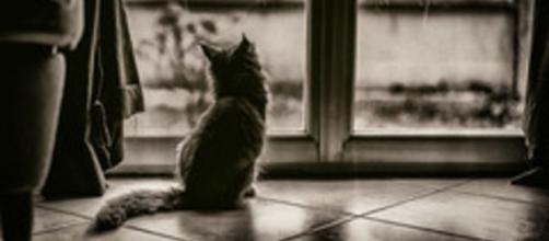 Chat lui aussi mérite un décofinement progressif - Photo Flickr