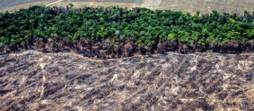 Desmatamento da Amazônia no início de 2020 aumenta 55% em relação ao ano anterior. Foto: Arquivo Blasting News.