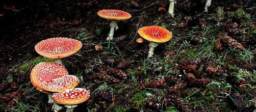 Há várias espécies de cogumelos, e muitas delas são venenosas. (Arquivo Blasting News)