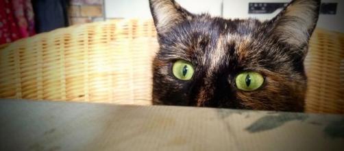 chat qui vomit il faut être vigilant - Photo Flickr