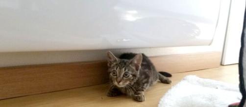 chat : ces signes qui montrent que vous ne l'aimez pas - photo flickr