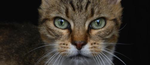 Coronavirus : deux chats malades recensés à New York - rtl.fr