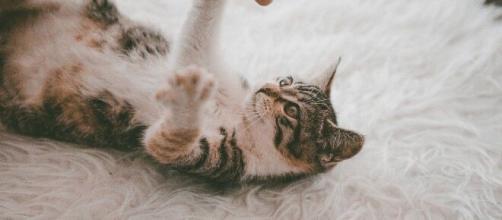 chat : s'il vous marche dessus c'est pour plusieurs raisons - photo pixabay