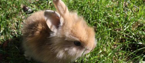 Visuel de lapin nain dans un jardin