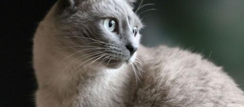 chat : le bicarbonate de sodium la solution pour de nombreux problèmes - photo pixabay