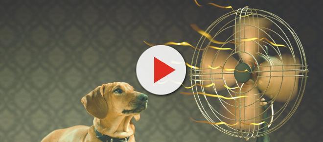 Evitar golpes de calor en los perros es muy importante en verano