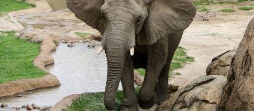 Imagen de archivo de un elefante en un escenario natural