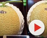 10 tra i cibi più costosi al mondo: il melone 'Yubari King' costa 20.000 euro al pezzo.