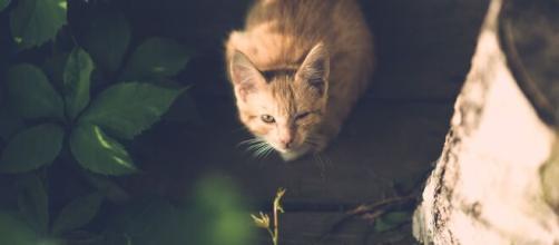 Un chat retrouvé mort par des promeneurs (source : image d'illustration Pixabay)