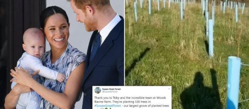 Prince Harry and Meghan Markle fans plant 530 trees (Image via Susses Great Forest/Twitter)