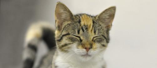 chat : sa personnalité serait influencé par celle de son maitre - photo pixabay
