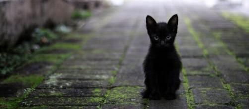 Un chat noir image d'illustration (source : Pixabay)