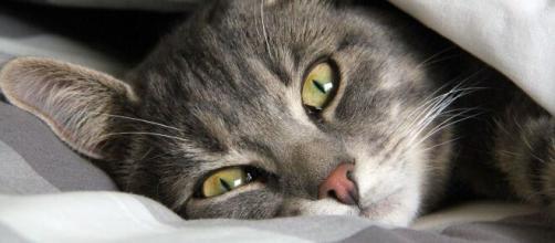 chat : ces gestes du quotidien qui raccourcissent son espérance de vie - photo Pixabay
