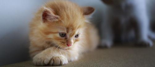 chat : la période de déconfinement un étape difficile pour lui - photo pixabay