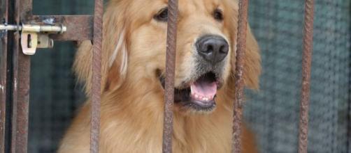 Coronavirus / China decide prohibir la cría de perros y gatos para consumo humano