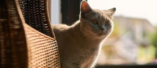 chat : il est recommandé d'être moins proche si vous avez des symptômes du Covid-19