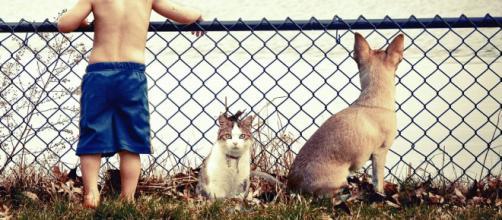 chat s'il vous suit partout ce n'est pas seulement parce que vous êtes son pilier