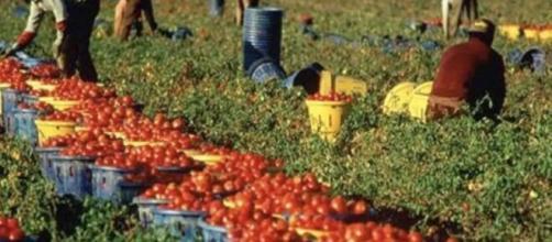 Reddito di cittadinanza: nella bozza del prossimo decreto i beneficiari possono lavorare nei campi ed esser pagati senza perdere il sussidio.