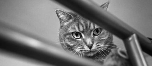chat : s'il vous montre ses fesses ce n'est pas seulement pour dire bonjour