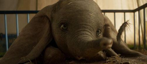 O signo de 5 atores que fazem parte do filme 'Dumbo'. ( Arquivo Blasting News )