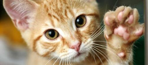Por primera vez en España se detecta coronavirus en un felino