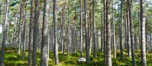 Associação preocupada com a gestão local da floresta