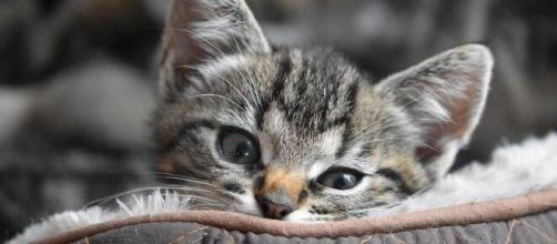 chat : s'il vous suit jusqu'aux toilettes ce n'est pas seulement par plaisir - photo Pixabay