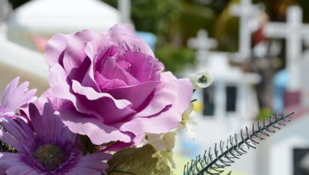 Fiori Del Mese Di Giugno conversano in lutto: addio a stefania, la 21enne che dipinse