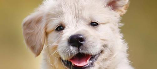 La nueva ley del bienestar animal alegra a los perros