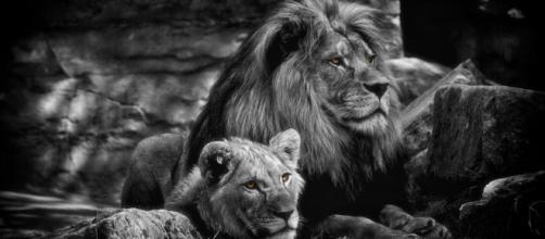 Oroscopo e classifica di domenica 14 giugno: Ariete passionale, lavoro top per il Leone.