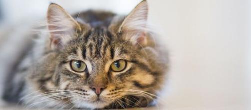 Si el GC376 Si funciona en gatos también podría funcionar en humanos