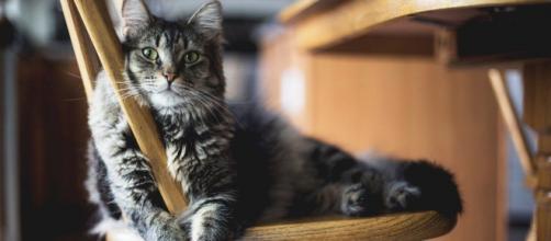 chat : s'il vient dans la cuisine ce n'est pas seulement pour manger - photo pixabay
