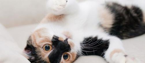 Los gatos adultos deben tener cuidados especiales. - elespectador.com