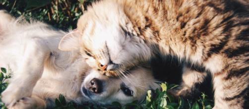 5 questions pour tout savoir sur l'alimentation du chien ! - Titre ... - santechienchat.com