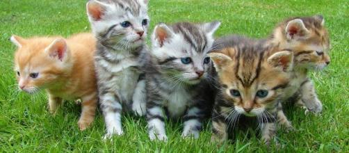 Si votre chat gratte à côté de sa gamelle ce n'est pas par plaisir - photo Pixabay
