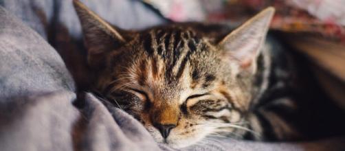 chat : s'il dort à vos pieds ce n'est pas seulement une question de confort - photo pixabay