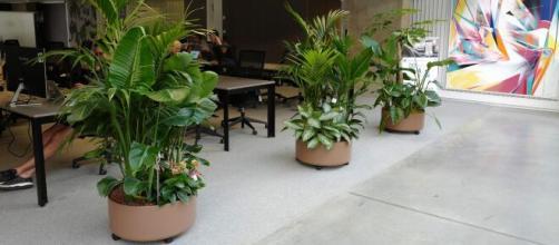 Plantez respirez, une start-up spécialisée dans l'installation et l'entretien d'îles végétales au bureau (source : Plantez respirez)