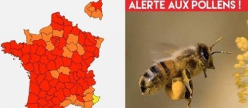 La France fortement touchée par le pollen en ce moment - Montage photo