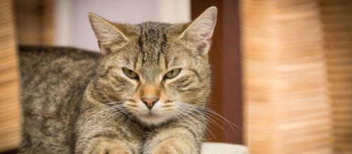 Chat vous réveille la nuit - Photo Pixabay