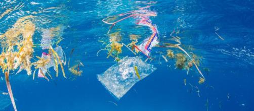 SportsEco.com | 3 de Julio, Día Internacional sin Bolsas de Plasticos - sportseco.com