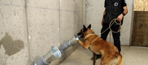 Animais podem detectar cheiro de assintomáticos. (Arquivo Blasting News)