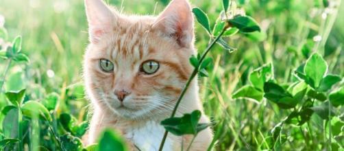 chat : comment le protéger des fortes chaleurs cet été - Photo Pixabay