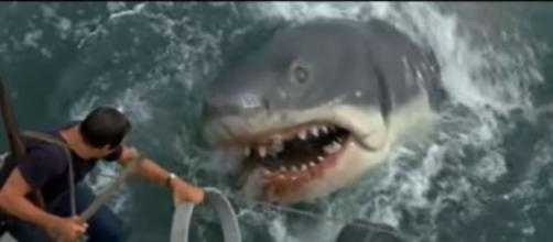 Scene from Steven Spielberg movie Jaws (1975). [Image source/Movieclips YouTube video]