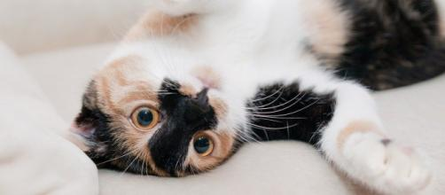 chat s'il vous mord ce n'est pas uniquement pour jouer - photo Pixabay